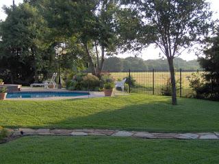, My Parents' Backyard